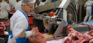 Pork Processing Insight