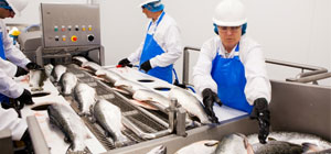 Fish Processing Insight